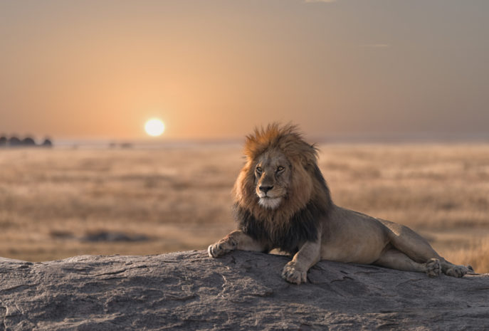 safari de lujo viaje tanzania y zanzibar