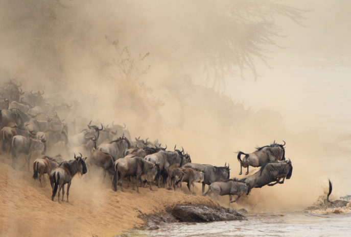 Distance view of migration of a herd of horses