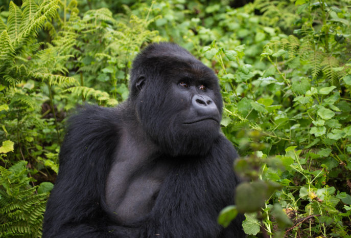 Viajes de Lujo a Uganda organizado